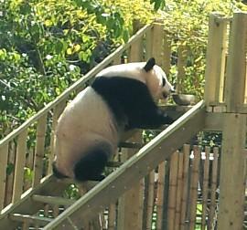Juego Del Oso Panda Simple Cunto Podra Costar Encontrar